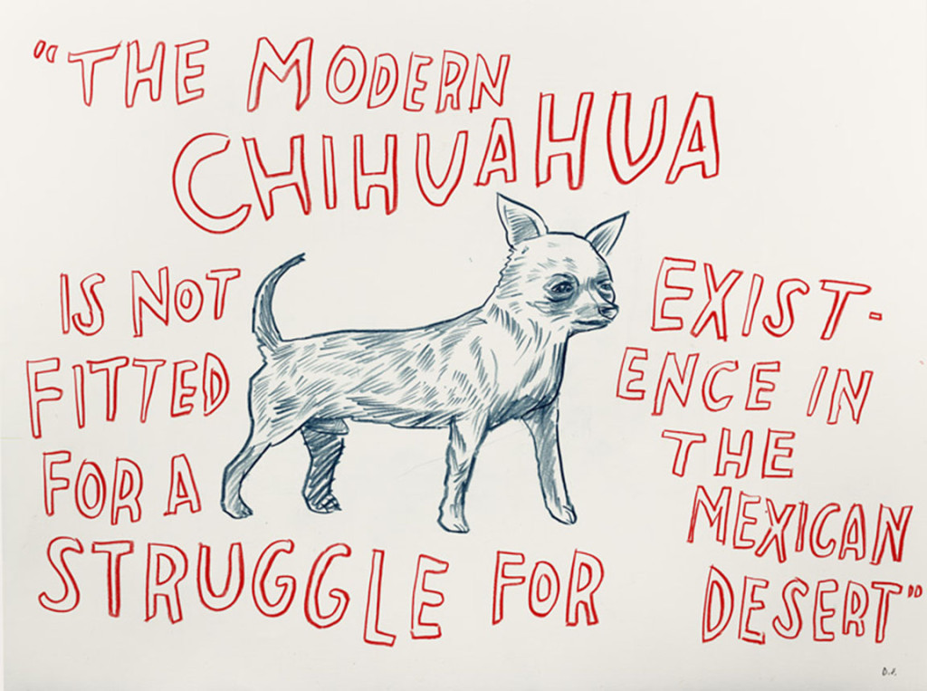 "Dave Eggers - ""The Modern Chihuahua is not Fitted for a Struggle for Existence..."""