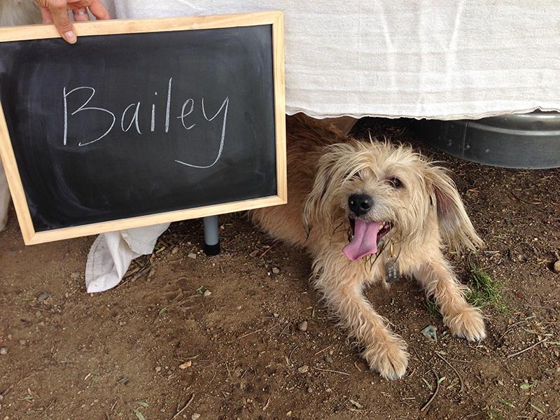 Bailey LICK Photoshoot