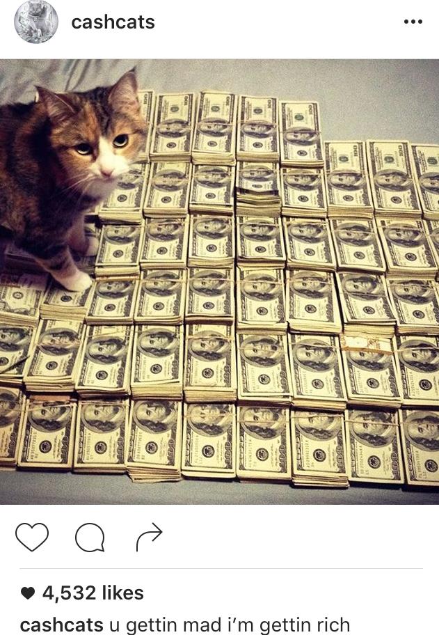 Cashcats Instagram