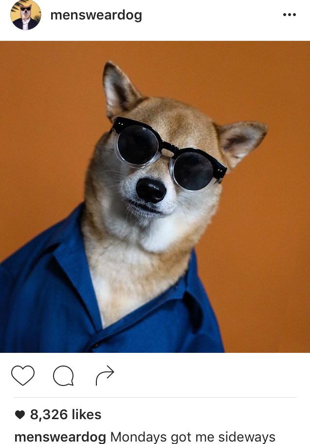 Menswear Dog Instagram